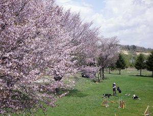 春のメインフィールド
